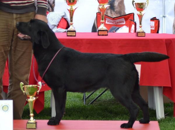 ROSE - Labrador Retriever Kennel - CLAUSWEB